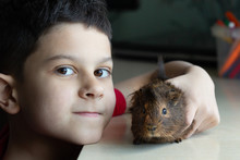 Little Hispanic Boy Holds A  Guinea Pig, Concept Of Friendship Of Children And Pets