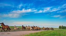 Herd Of Horses Running Along T...