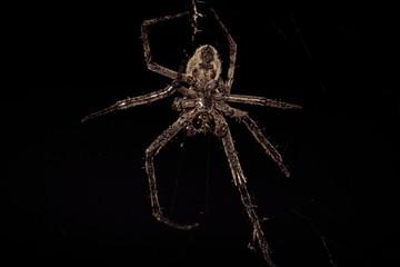 spider on black background