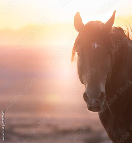 Photo Wild horses