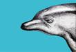 Delfín nariz de botella Perfil Ilustración