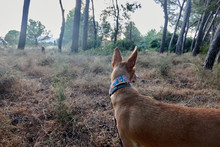 Dog Posing In The Forest With ...