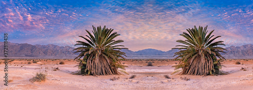Fotografie, Obraz Panorama of Savannah valley and sand desert, beautiful nature in  desert areas o