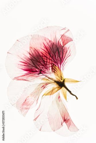 Fototapeta dried flowers on the white background