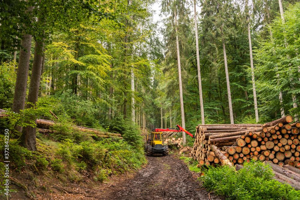 Holzvollernter im Wald bei der Arbeit, Bäume werden gefällt, entastet und für den Transport gestapelt.