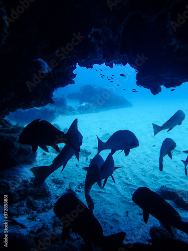 Scuba diving and caves Wall mural