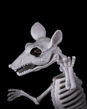 Scary Halloween Decor With Rat Skeleton On Black