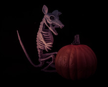 Bright Orange Pumpkin With Rat...