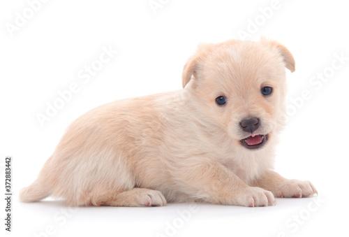 One little puppie. Wallpaper Mural