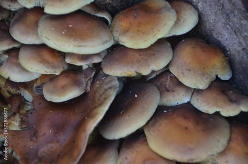 Fototapeta multitude de champignons