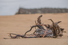 Dead Tree In The Desert, Dead ...