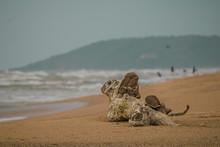 Dead Tree On The Beach, Driftw...