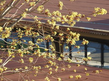 Wiosna W Mieście - Gałęzie,...