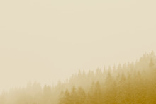 Coniferous Forest With Mist, F...