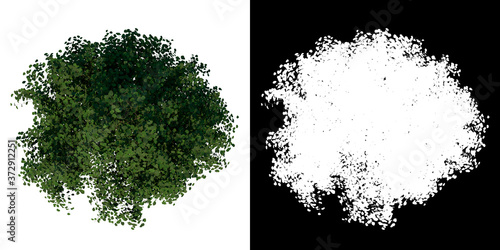 Foto Top view of Tree (Young Silver Linden 2) Plant png with alpha channel to cutout