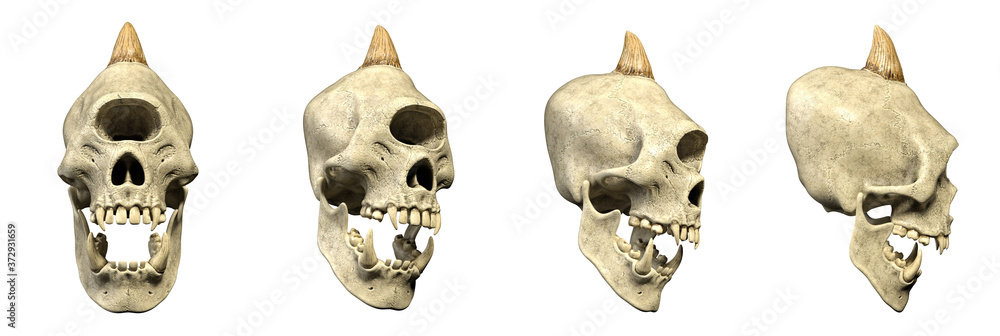 Fototapeta 3D Illustration - Horned dreadful Cyclops Creature Skull with bared teeth - four different isolated Props Images as a Set on white background - e.g. for Halloween Designs