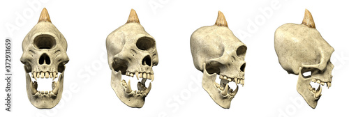 3D Illustration - Horned dreadful Cyclops Creature Skull with bared teeth - four different isolated Props Images as a Set on white background - e Canvas Print