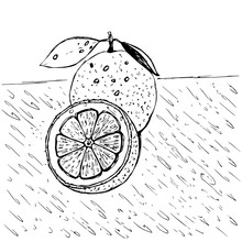 Oranges Hand-drawn Sketch. Sketch Of A Vector Illustration Of Food. Vintage Style