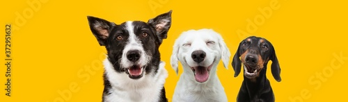 banner three happy puppy dogs smiling on isolated yellow background. © Sandra