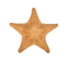Dried Sea Starfish Isolated On...