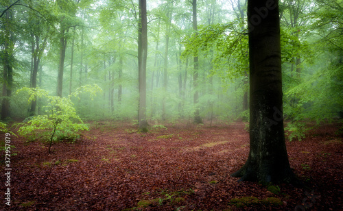 Foto Beautiful foggy morning in green forest