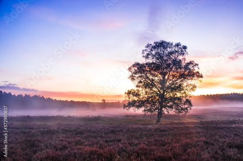 Fotografie, Obraz Lüneburger Heide