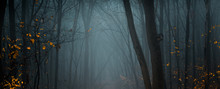 Mysterious Pathway. Footpath In The Dark, Foggy, Autumnal, Misty Forest. Wide Panorama.