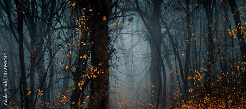 Mysterious fall forest Wallpaper Mural