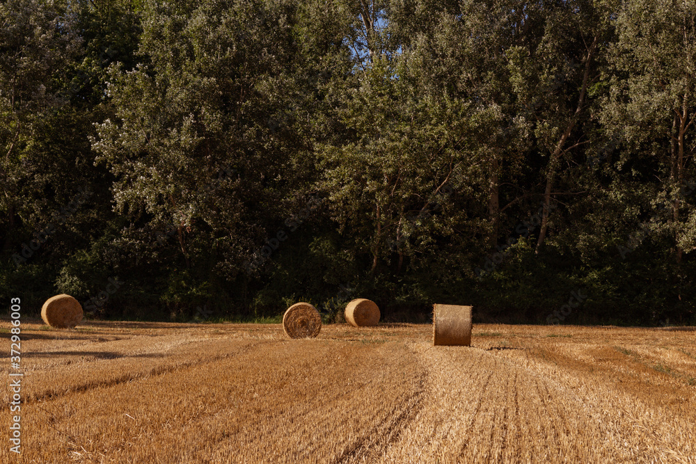 Fototapeta agricultural field with straw bales