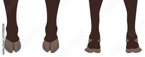 Leinwand Poster 牛の足
