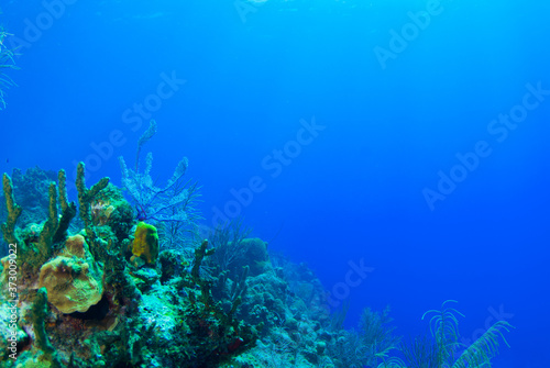 A tropical coral reef scene set against the perfect blue of the Caribbean sea Wallpaper Mural