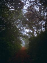 La Fria Mañana En El Bosque
