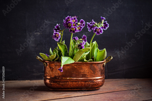 purple primrose in the pot Fotobehang