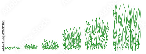 Foto Green lawn grass plant growth stages development