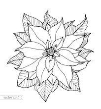 Poinsettia Isolated, Christmas Flower. Vintage Vector Artwork. Black And White. Coloring Book Page For Adult. Hand Drawn. Holiday Concept For Greeting Card, Gift, Branding, Logo, Label