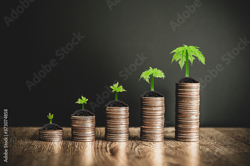 Pile of coins are stacked in a graph shape with trees growing for money saving ideas and financial planning insurance Fotobehang