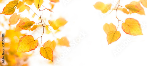 Autumn background with red, orange, yellow leaves and golden sun lights, natural bokeh Tableau sur Toile