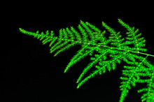 Green Plant Leaves On Black Ba...