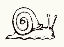 A Snail Creeps On The Ground. ...