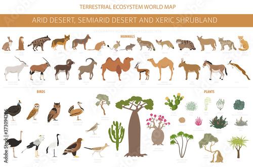 Fotografia, Obraz Desert biome, xeric shrubland natural region infographic