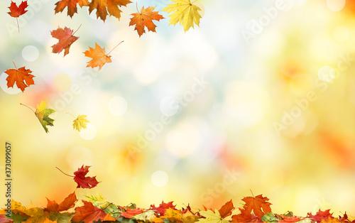 .Colorful fall foliage. Falling autumn maple leaves natural background Fototapet