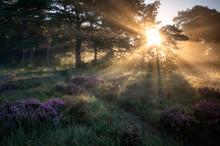 Sunbeams At Sunrise In Misty F...