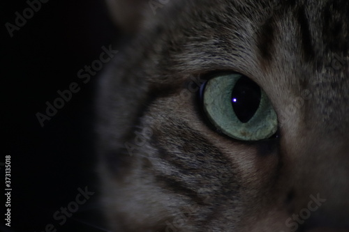 Fotografie, Obraz Retrato de gato de ojos verdes y mirada intensa