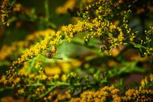 Macro Shot Of A Wasp (Polistes...