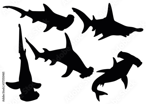 Obraz na plátne Hammerhead sharks in the set. Predatory fish.