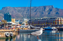 Seagull In Cape Town Port And ...