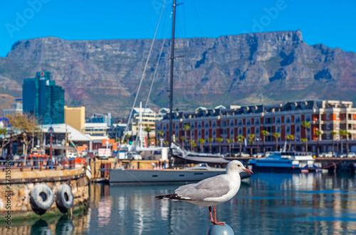 Fototapeta Seagull in Cape Town port and harbor with the Table Mountain in the background, Cape Town city, South Africa