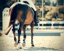 Equestrian Sport. Overcome Obs...