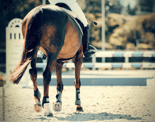 фотография Equestrian sport. Overcome obstacles.