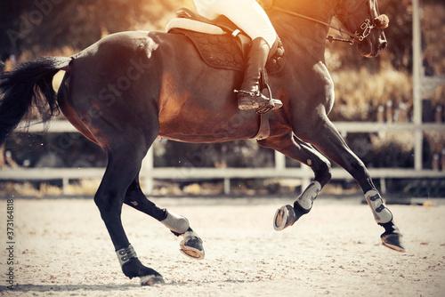 Obraz na plátně Equestrian sport. Galloping horse.